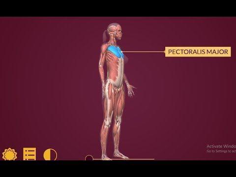 Phần mềm Anatomy - Khám phá cơ thể con người